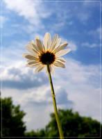 Against the Sun... by FeliFee