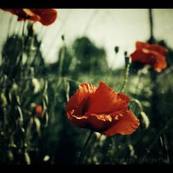 copperflowers by bailey--elizabeth