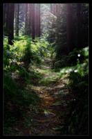 Forest - scenery by rejmann