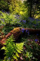 Woodland Fern by taffmeister