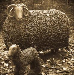 Steel Wool by taffmeister