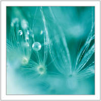 Dew Droplet by Sommersprotte