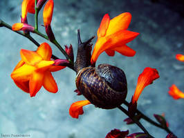 Snail 4 by Rilrae