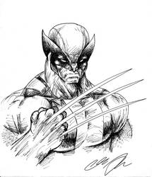 Wolverine by PepesArt