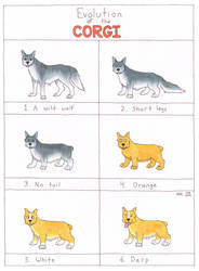 Evolution of the Corgi by Everch