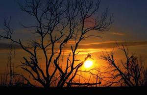 The Beauty of a Sunset by SalemCat