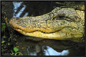 Wildlife Garden White Gator by SalemCat