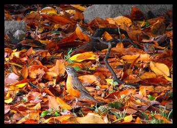 Camouflage Bird by SalemCat