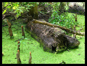 Swamp Scene by SalemCat