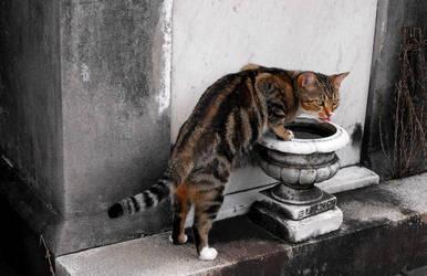 Lafayette Cemetery Cat by SalemCat