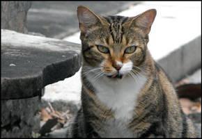 The Cemetery Cat by SalemCat