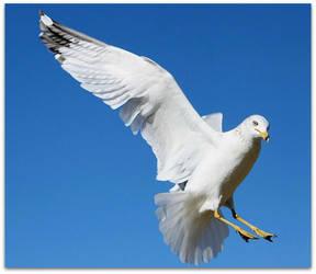 Seagulls Flight by SalemCat
