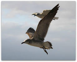 Seagulls Flying High by SalemCat