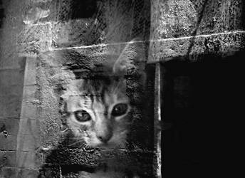 cat by lost-in-the-attic