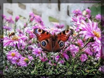 Butterfly effect by AikoMiyuki