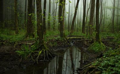 Muddy Foggy Woods by ChewyFloyd