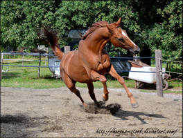 River - Stock 5 by Horses--Stock