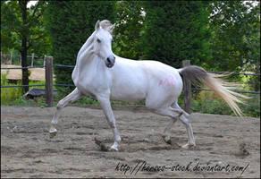 Garbo - Stock 26 by Horses--Stock