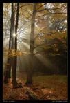 Light beams by semik