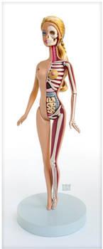 Barbie Anatomical Model by freeny
