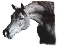 horse 6 by alegreghi