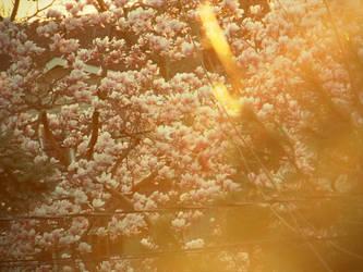 Magnolia Tree by monkeyluver199
