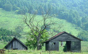 Two Barns and a Tree by Miladydaisy
