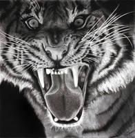 Sumatran Roar 4098 by Ihabiano