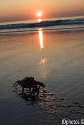 crab by JDfotos