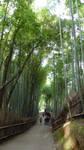 Arashiyama Bamboo forest by Bakenekoya