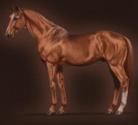Thoroughbred Stallion by pipamir