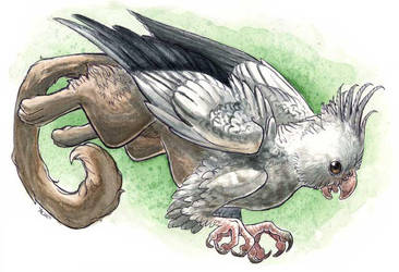 Windy the Tielgryph by maggock