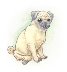 Pug-face by maggock