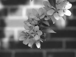 flowers by drunkensailoret