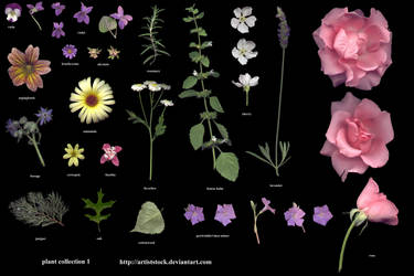 Plants - Collection 1 by ArtistStock