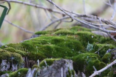 Mossy by ArtistStock