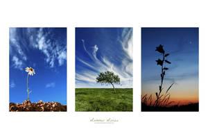 Summer Series by ageofloss