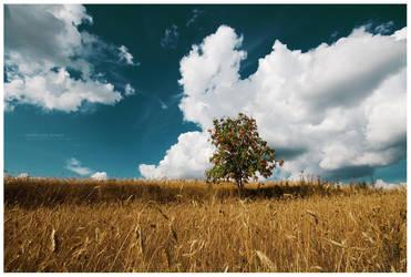 Heartland: Rowan by ageofloss