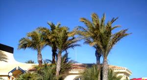 palms by shetty05