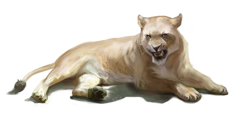 Some Lioness by kepperoni