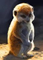 Baby Meerkat by kepperoni