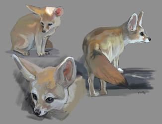Fennec Fox Studies by kepperoni