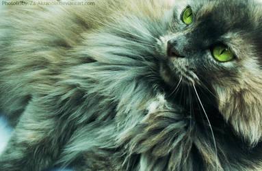 Feline eyes by ZakraArt