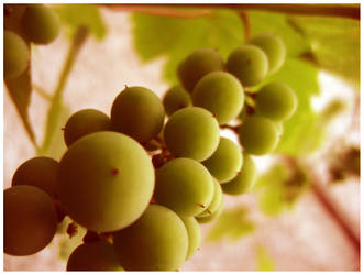 Young Grape by AlexandraMan