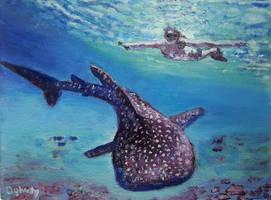Whale shark sanctuary by Dennis64