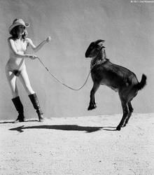 goat wrangling II by Stephanie-Anne