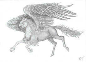 Hippogriff by Ruth-Tay