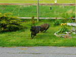 Eight Legged Dog! by KaraCrane