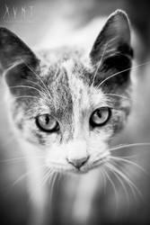 Cat Portrait by Xvant