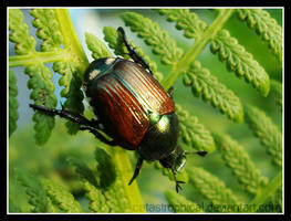 japanese beetle by catastrophical